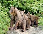 Die Bären der Redoubt Bay - Kurzreise