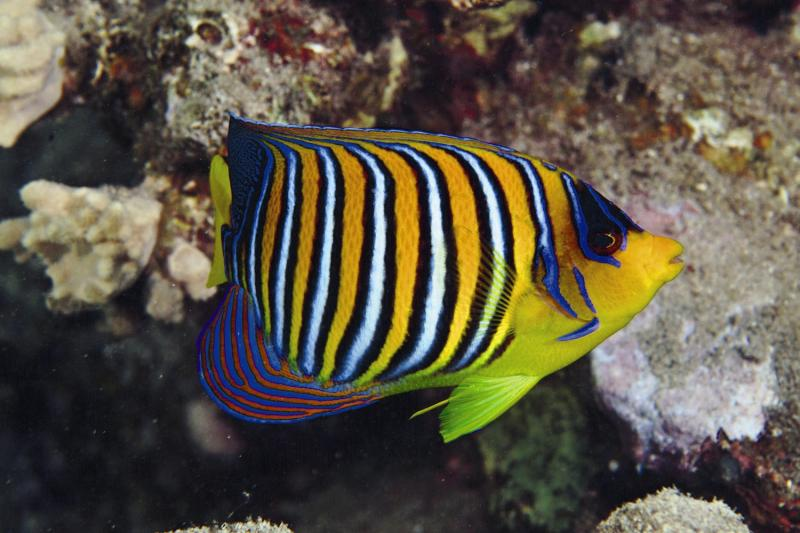 Three Corners Equinox Beach Resort Tiere