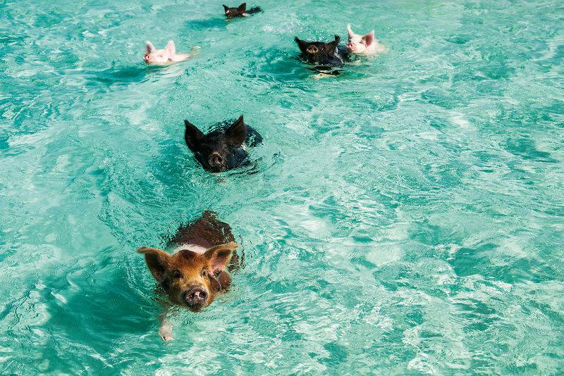 Grand Isle Resort Spa Tiere